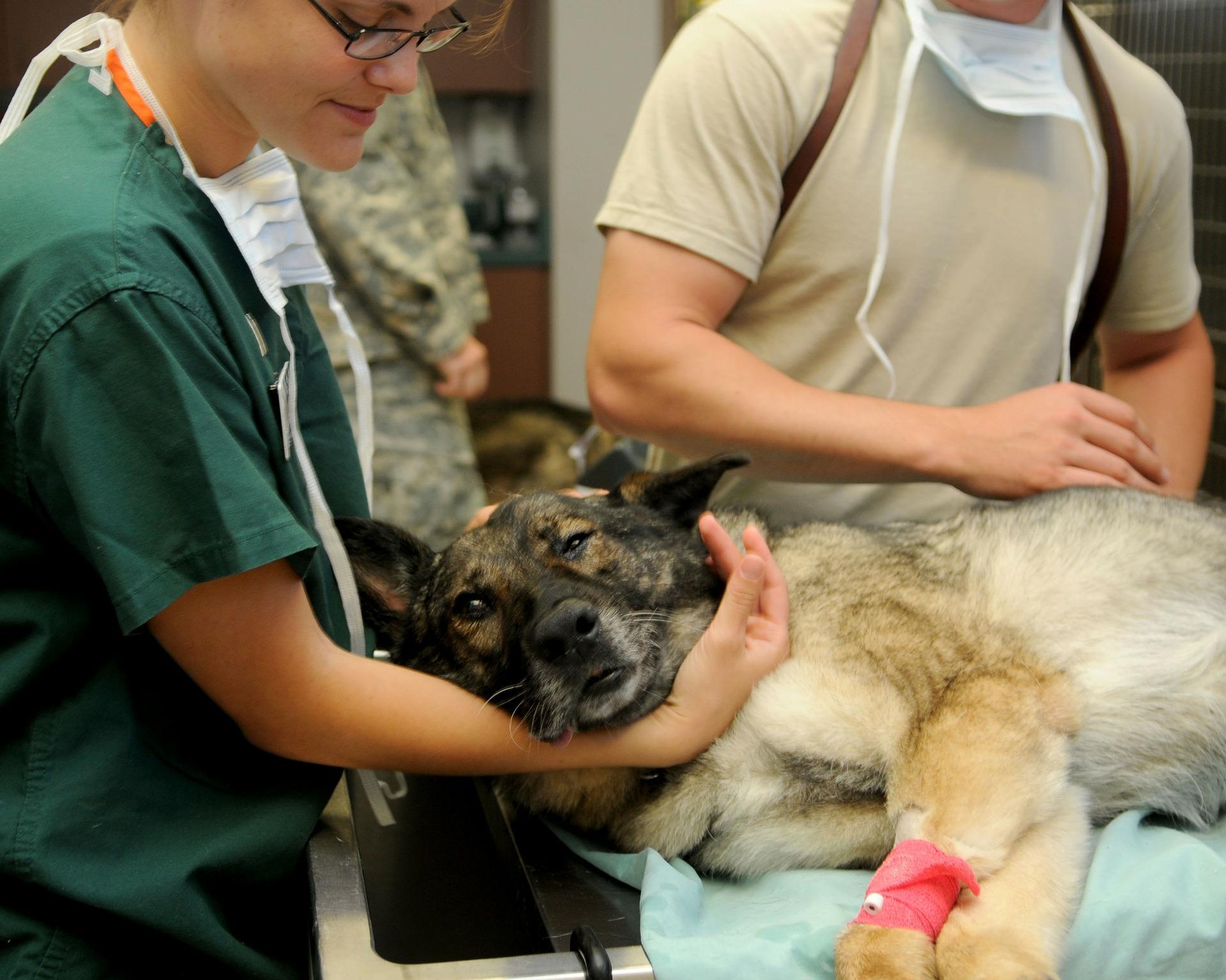 veterinary-85925_1920.jpg (520 KB)